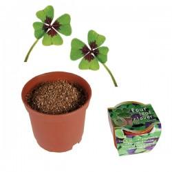 Glücksklee zum pflanzen